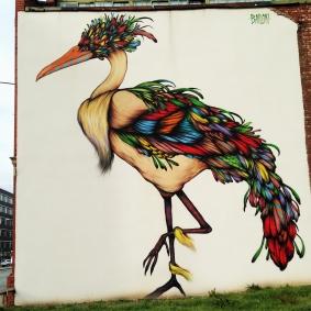 bird-plumage